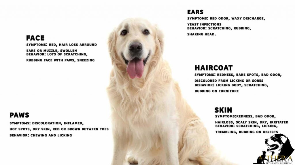 dog skin problems and allergies