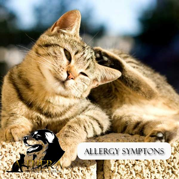 allergy-symtons
