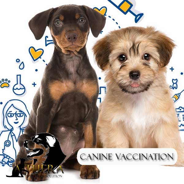 canine-vacination