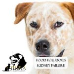 food-for-dog-kidney-failure